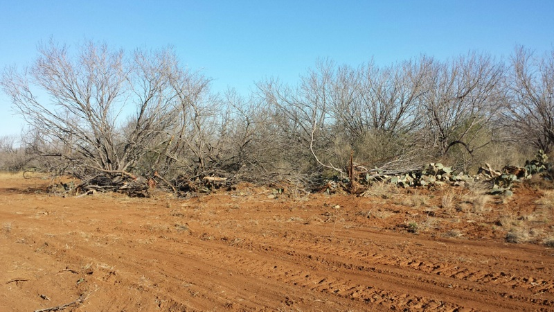 land clearing services-san antonio texas area-3